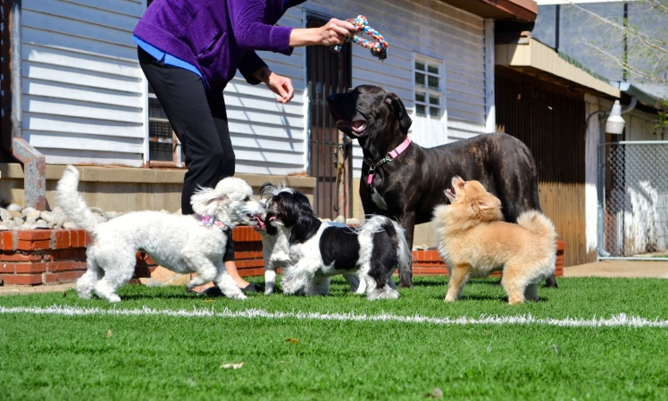 moving_with_pets_image_3_doggie_daycare