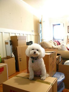 moving_with_pets_image_4_real_estate